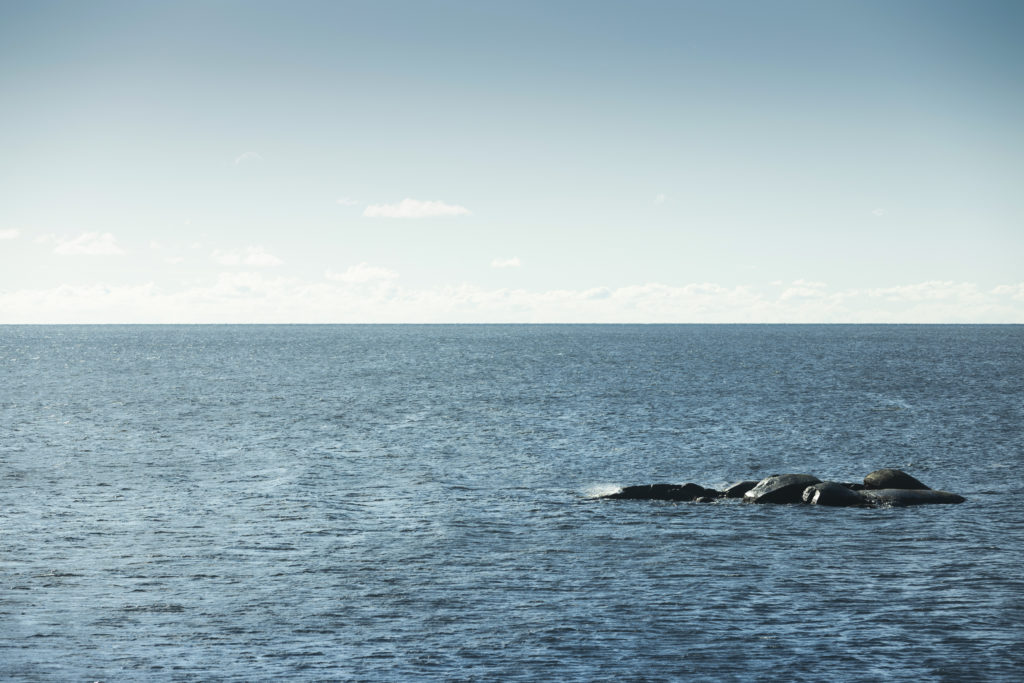 Blått hav med skjært og himmel
